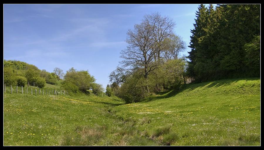 http://www.foto-dfg.de/images/WZ/2010/Eifel/20100522%207775%20Im%20Genfbachtal_co.jpg
