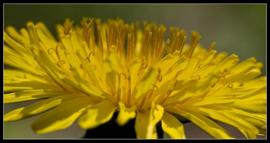 http://www.foto-dfg.de/images/WZ/2010/Eifel/20100522%207782%20Loewenzahn_co.jpg