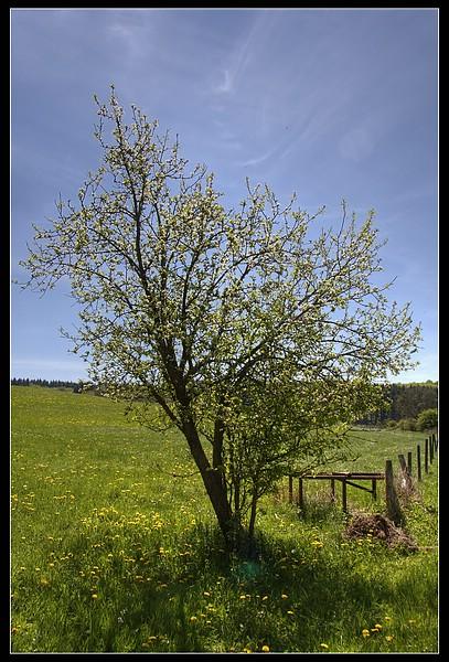 http://www.foto-dfg.de/images/WZ/2010/Eifel/20100522%207790%20Im%20Genfbachtal_co.jpg