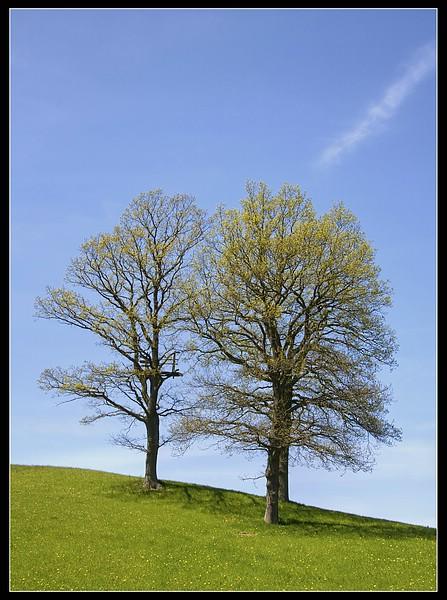 http://www.foto-dfg.de/images/WZ/2010/Eifel/20100522%207795%20Baumgruppe_co.jpg