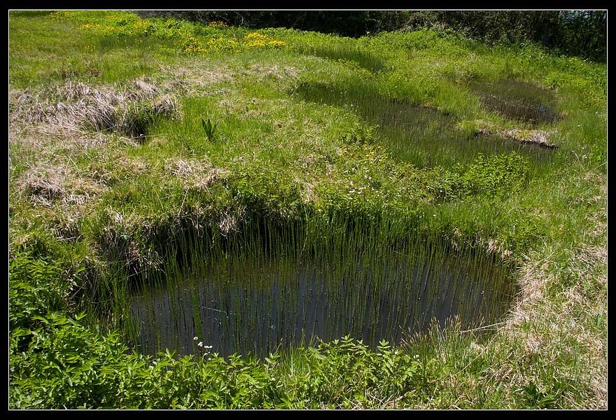 http://www.foto-dfg.de/images/WZ/2010/Eifel/20100522%207806%20Kalksumpf%20bei%20Ripsdorf_co.jpg