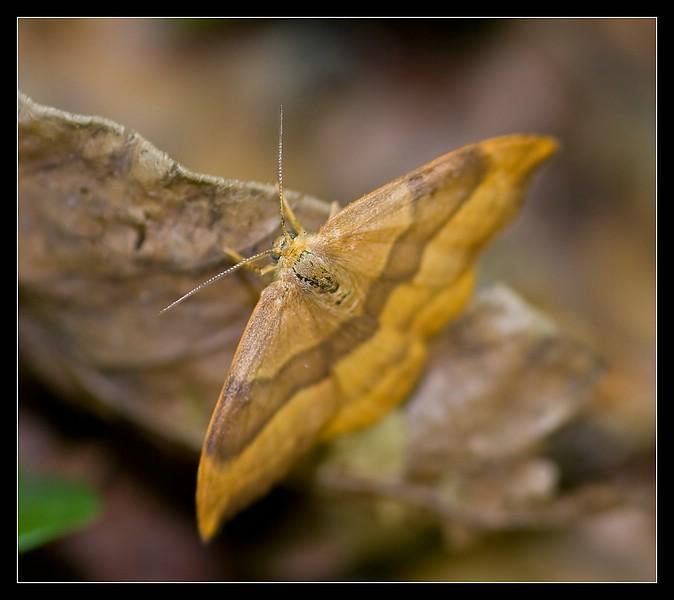 http://www.foto-dfg.de/images/WZ/2010/Eifel/20100522%207856%20Spanner_co.jpg