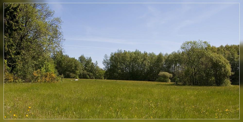 http://www.foto-dfg.de/images/WZ/2012/Eifel2/20120526%204924%20Krekeler%20Heide_s.jpg