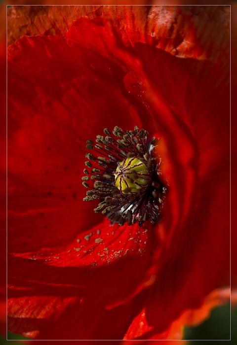 http://www.foto-dfg.de/images/WZ/2012/Eifel2/20120526%204981%20Klatschmohn_s.jpg