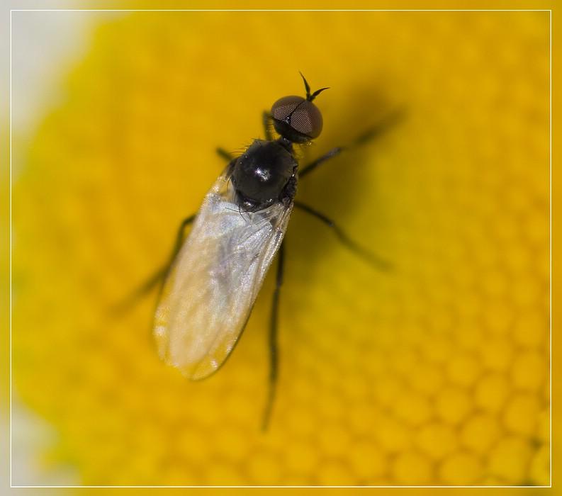 http://www.foto-dfg.de/images/WZ/2012/Eifel2/20120526%205239%20Fliege_s.jpg