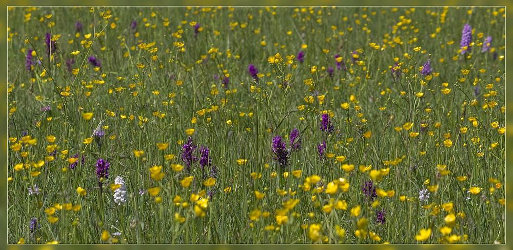 http://www.foto-dfg.de/images/WZ/2012/Eifel2/20120526%205323%20Krekeler%20Heide_s.jpg